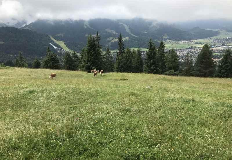 Nächstes Ziel: Die Almwiese bei der Eckenhütte, über den Wandersteig ab Tannenhütte gut zum Wandern mit Kindern