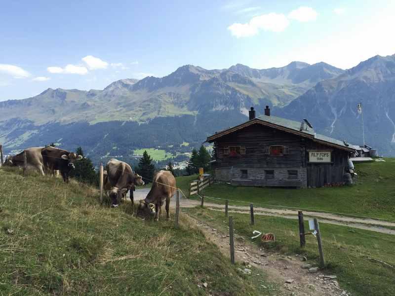 Bei der Familienwanderung kommt man vorbei an der Alp Fops oberhalb von Lenzerheide