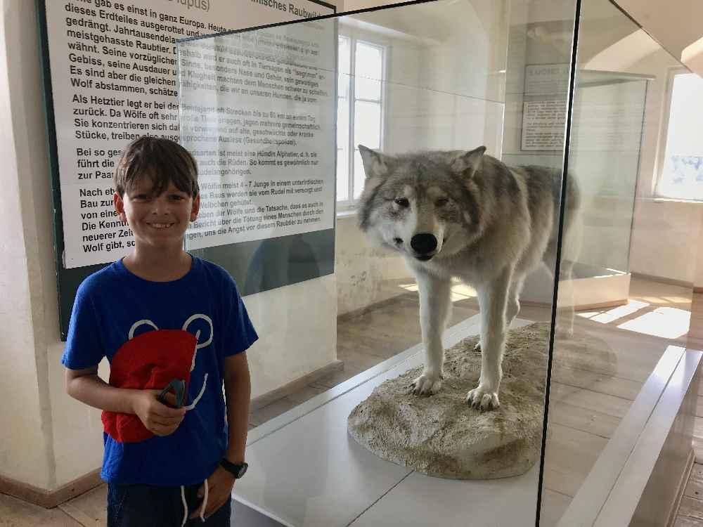 Im Museum auf der Rosenburg gefällt unserem Kleinen der Wolf besonders - er ist riesig!
