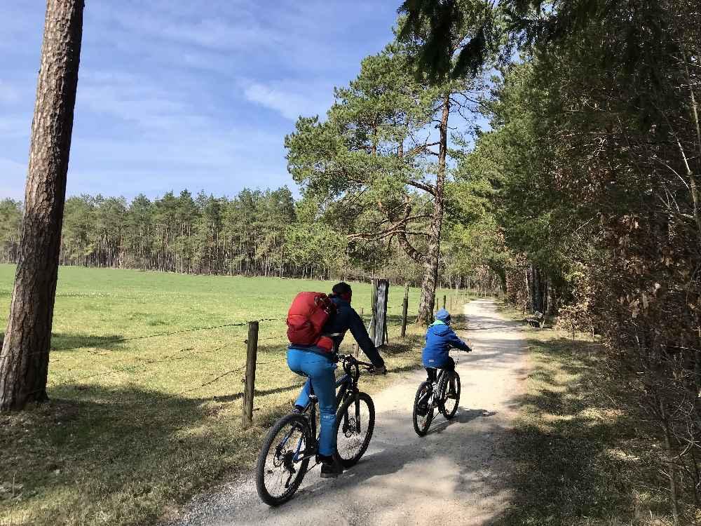 Die Ammersee Radtour mit Kindern verläuft meist am See, teils auch durch den Wald
