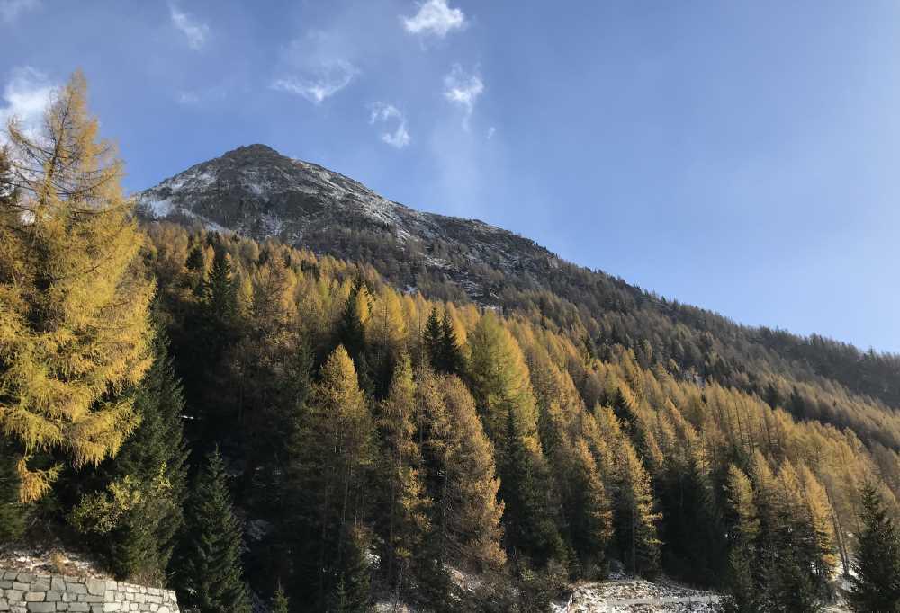 Oben an der Felbertauenstrasse ist wunderschöner Herbst mit der goldgelben Lärchenfärbung
