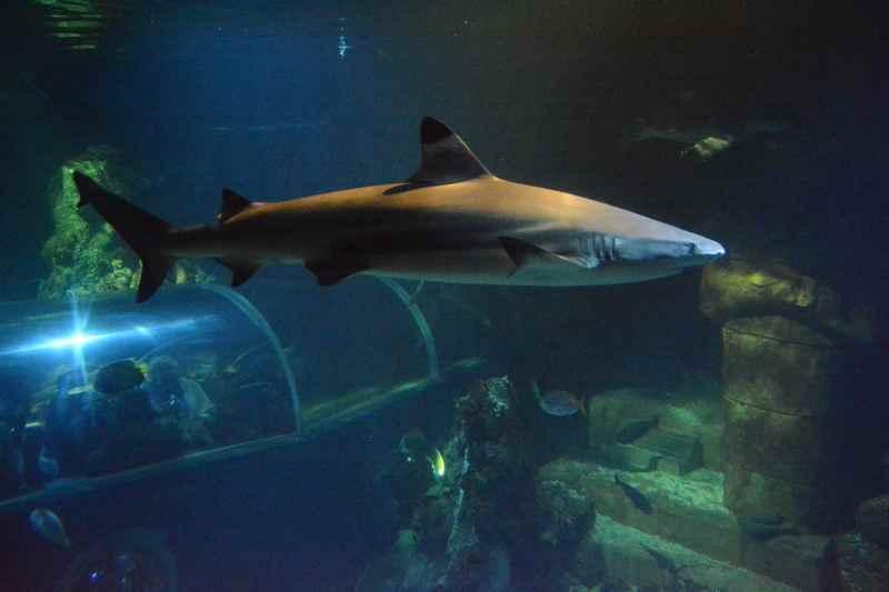 Bist du auch der Suche nach dem nächstliegenden Zoo? - hier die Wikipedia Liste