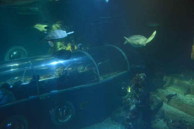 Ins Aquarium Konstanz mit Kindern - Ausflug am Bodensee