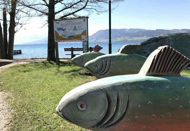 Die großen Holzfische sind das Ziel der Familienradtour am Attersee