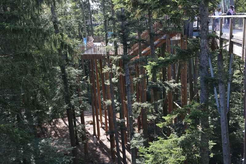 Gemütlich wandern wir auf dem Baumwipfelpfad Bayern