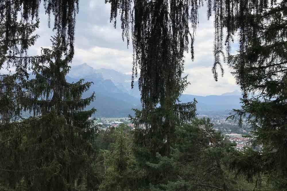 Zwischen den Baumwipfeln kann ich zum Wettersteingebirge hinüber schauen