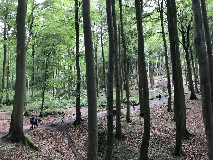 Einmalige Natur: Der geschütze Buchenwald Rügen ist nicht umsonst UNESCO Weltkulturerbe