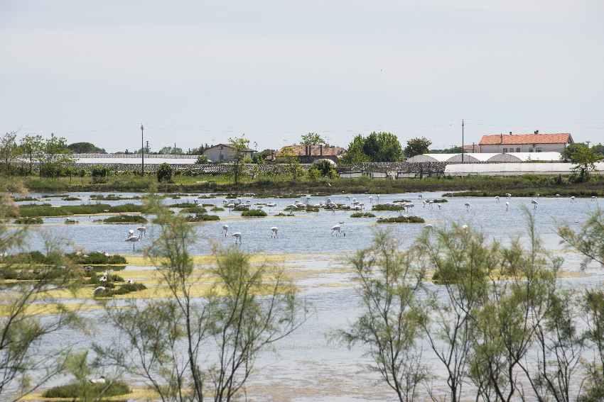 Für Familien eine der Cavallino Treporti Sehenswürdigkeiten: Die Flamingos