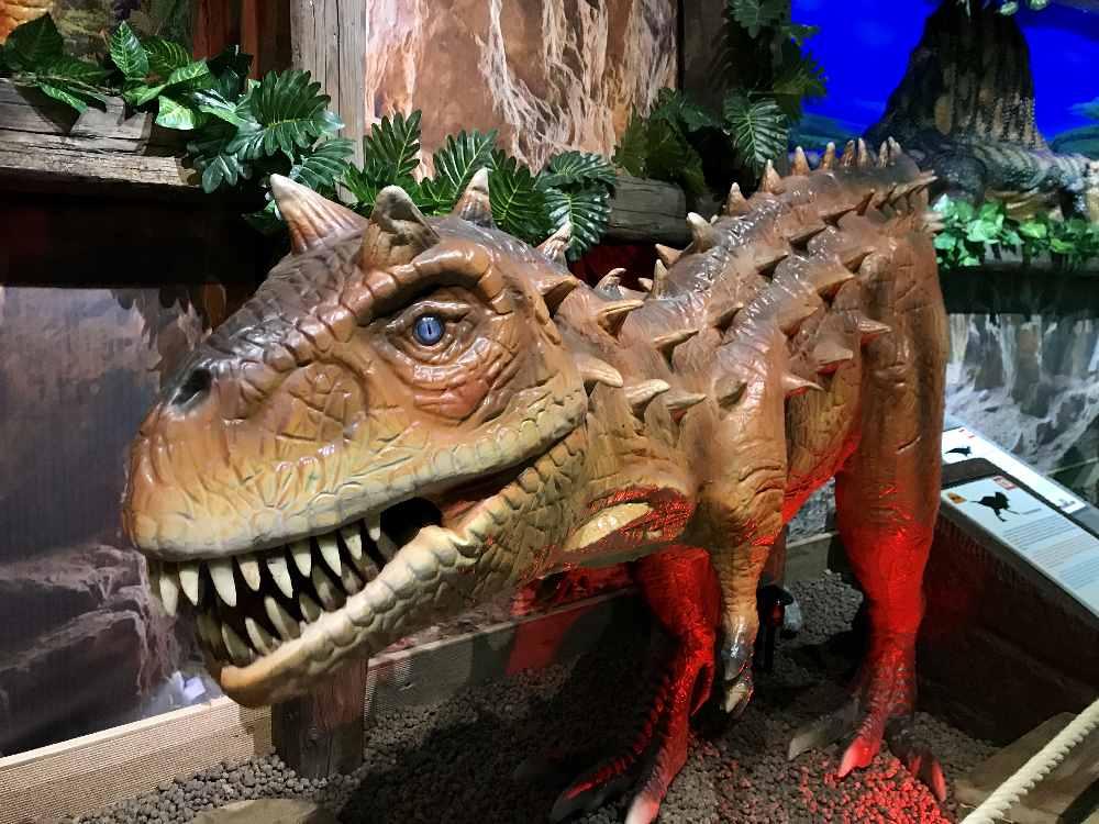 Einer der eidrucksvollen Exemplare im großen Ausstellungsraum im Dinoland