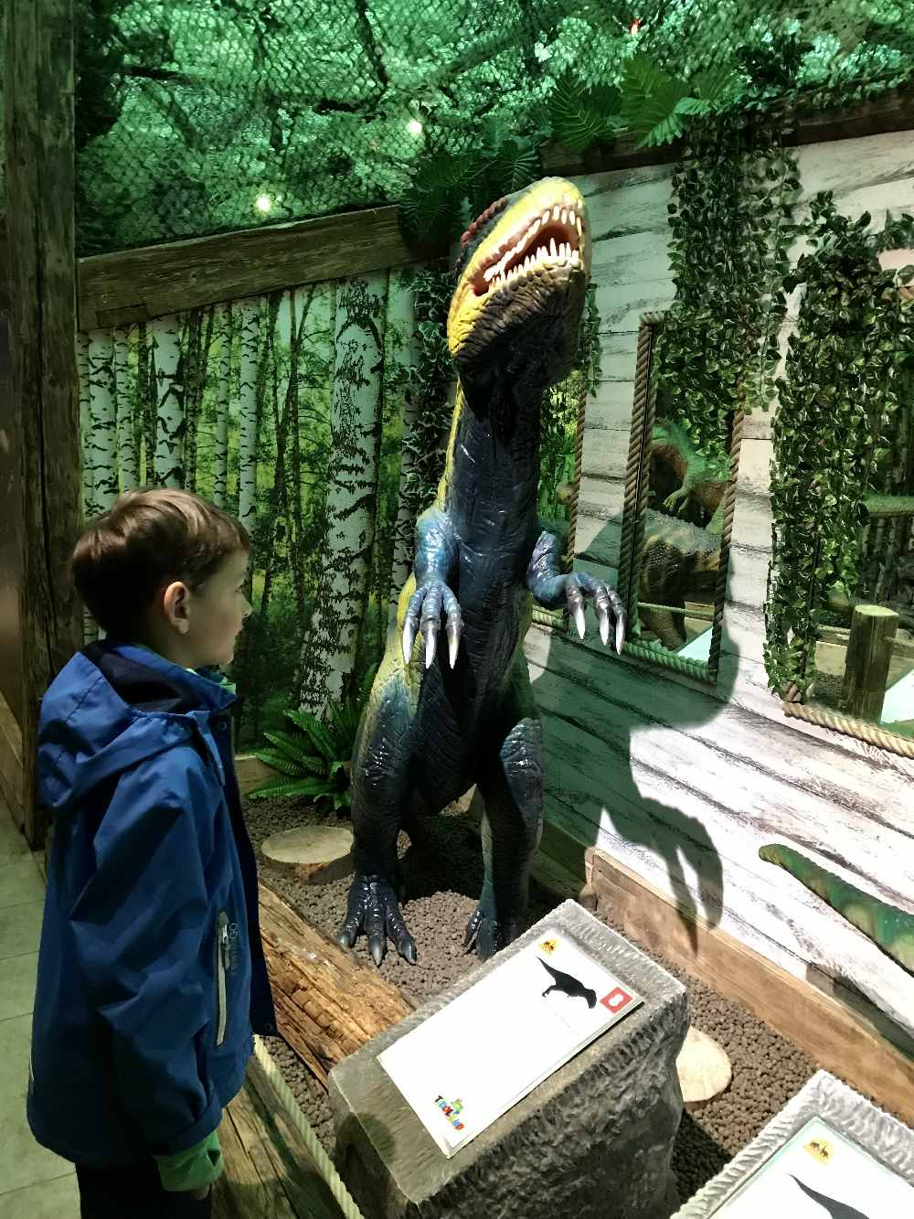 Bei den großeen Dinosauriern findest du jeweils ein Schild mit Erklärung