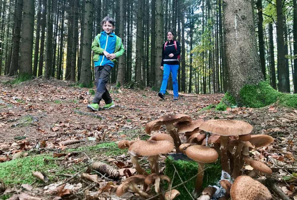 Sehr viele Pilze säumen unseren Wanderweg von der Donau zum Pühretstein