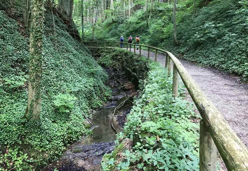 65 Stufen höher wandern wir durch dieses schöne Waldstück