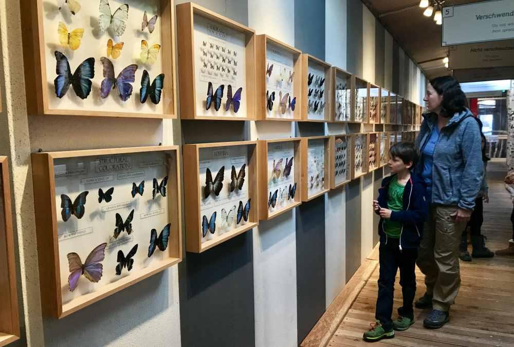 Wir schauen uns die verschiedenen Schmetterlinge an, Theorie für Kinder im Dschungelhaus