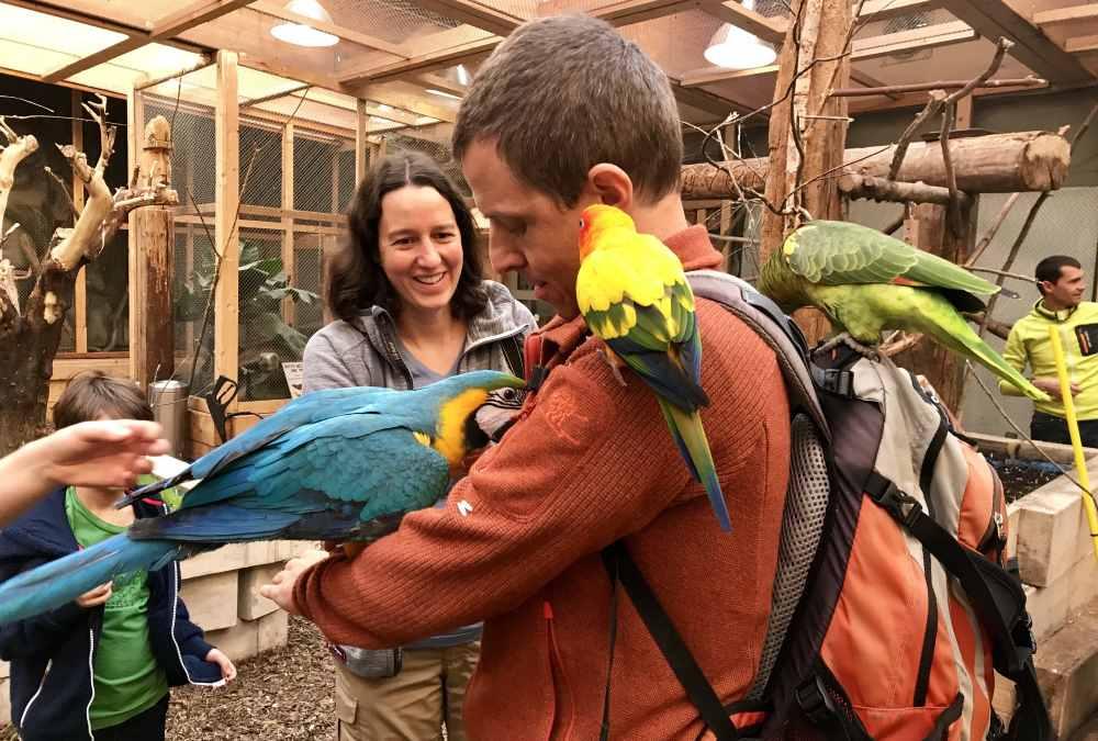 Unser besonderer Ausflug mit Kindern in Tirol: Wir füttern die Papageien im Dschungelhaus!