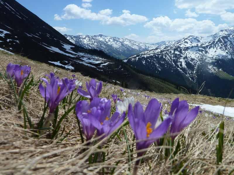 Frühlingswanderung am Kellerjoch