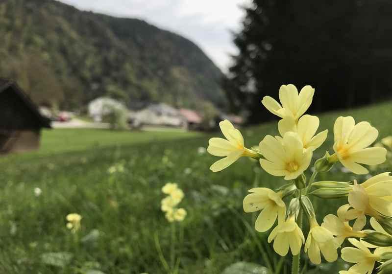 In Inzell starten wir die Frühlingswanderung an der Schlögener Schlinge
