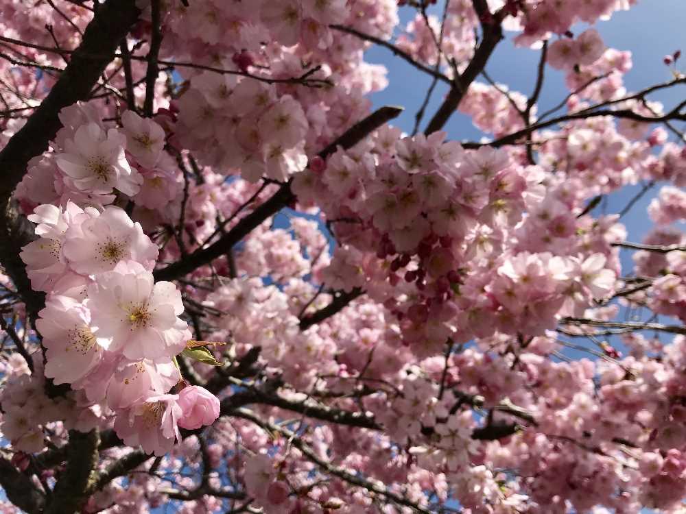 Die ideale Frühlingswanderung, wenn die Blüten sich öffnen!