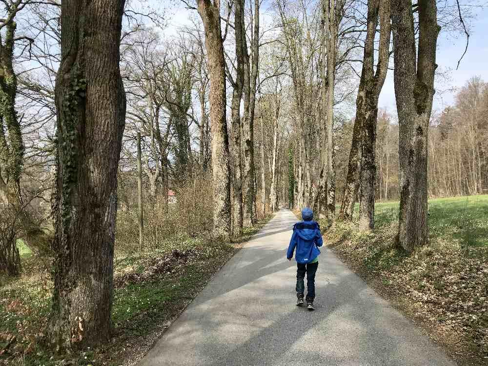 Vom Schloss wandern wir durch die schöne Allee mit den hohen alten Bäumen direkt zum See und den nächsten Gasthof