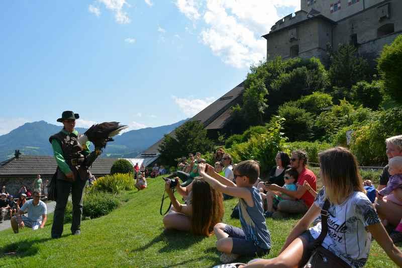 Die Greifvogelschau auf Burg Hohenwerfen - ein Ausflugstipp für Kinder