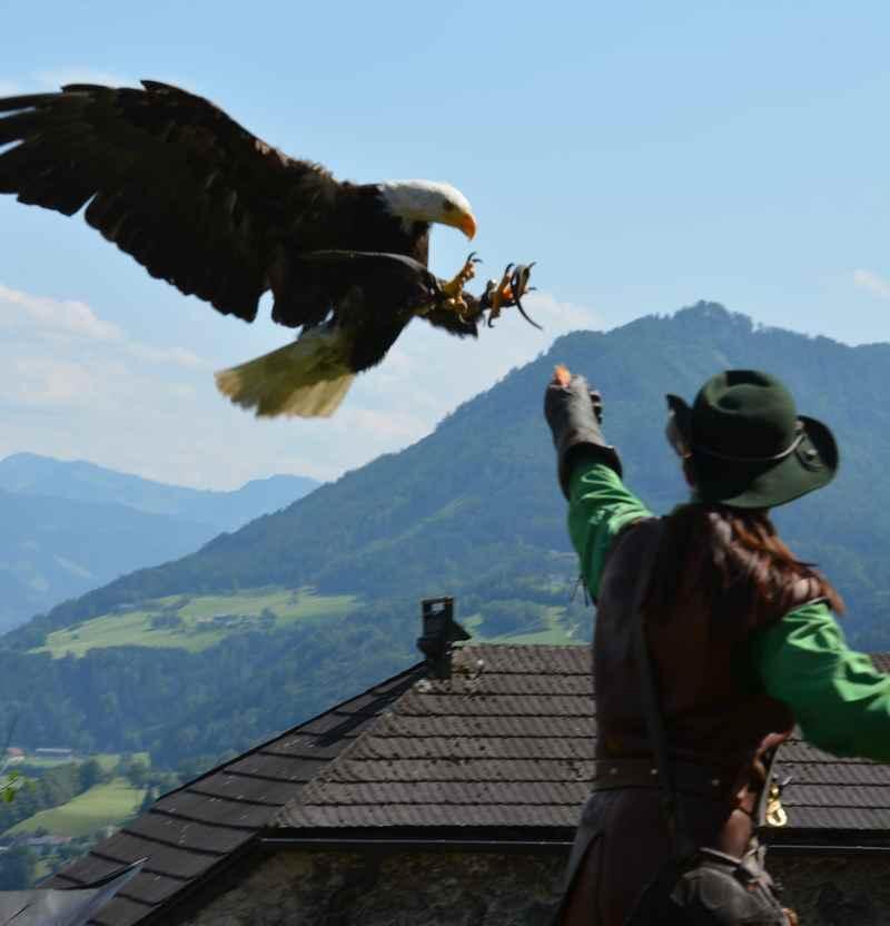 Burg Hohenwerfen Greifvogelschau -  Adler im Anflug