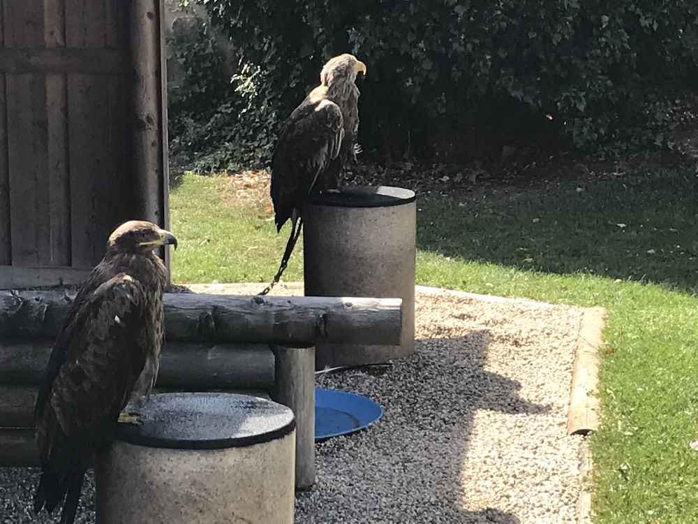 Vor der Greifvogelschau können wir die Vögel anschauen