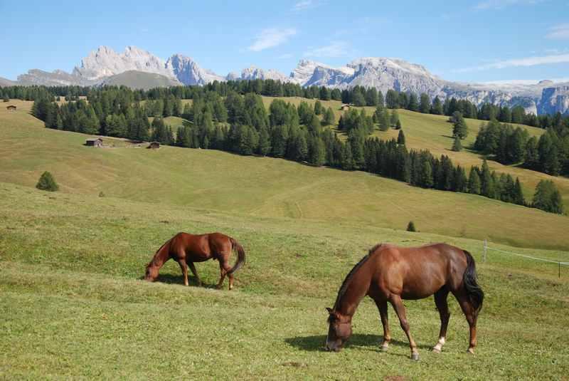 Im Sommer sind die Pferde aus der Alm. Tolle Naturkulisse bei der Mountainbiketour mit Kindern in Gröden