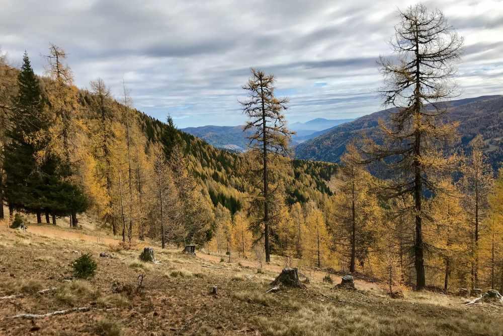 So schön herbstlich wird es auf unserer Wanderung in Kärnten im November