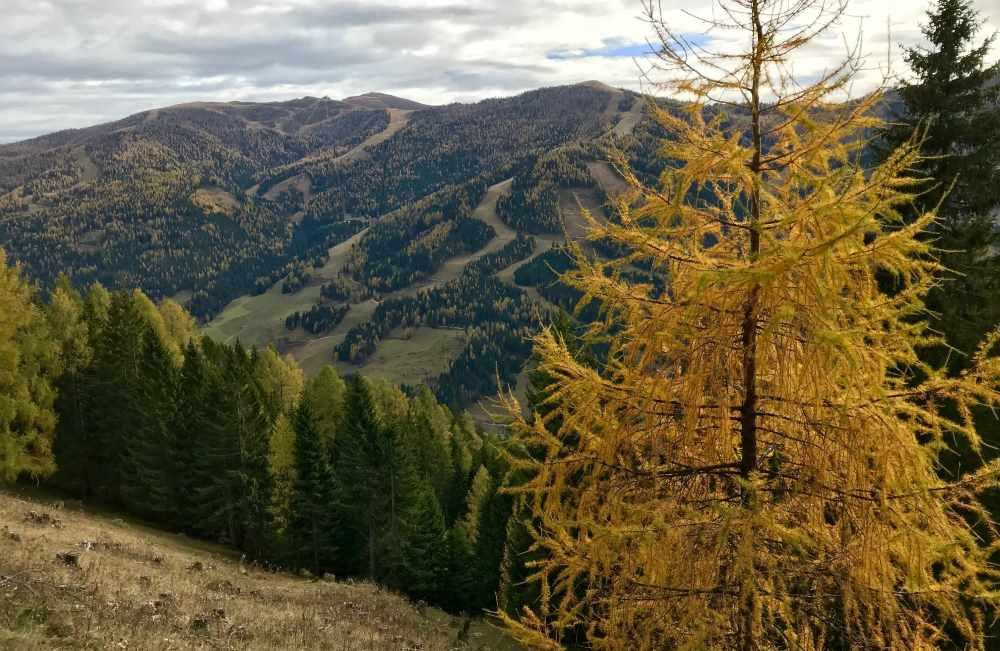 Auf dem Rückweg haben wir noch einmal diese schöne Herbstfärbung der Lärchen