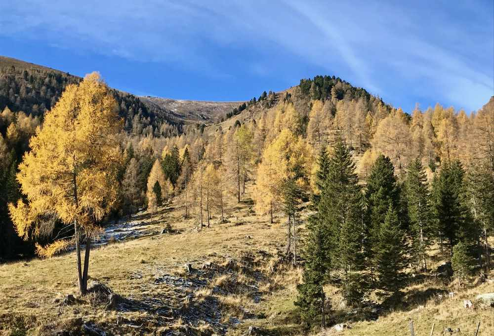 Bis zur Waldgrenze hatten wir diese schöne Herbstfärbung der Lärchen