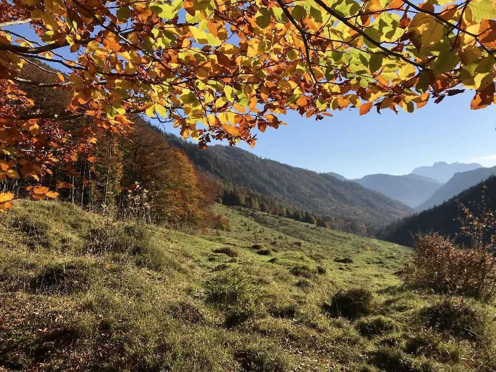 So schön bunt ist das Herbstlaub bei unserer Wanderung im Kaiserbachtal