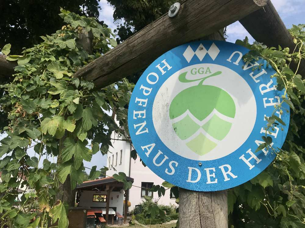Zum Ursprung des Bieres: Wie ist das mit dem Hopfen? Wir besuchen dern Hopfen-Erlebnishof in der Holledau