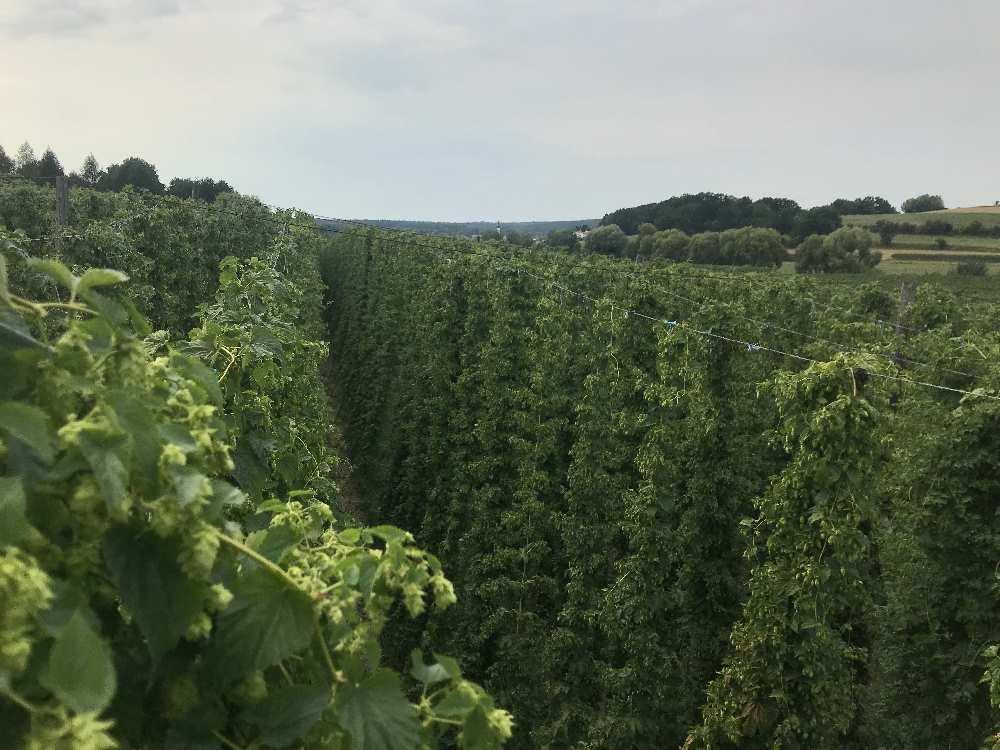 Der Hopfenhimmel - Blick von 7 Metern Höhe über die Hopfengärten in der Holledau