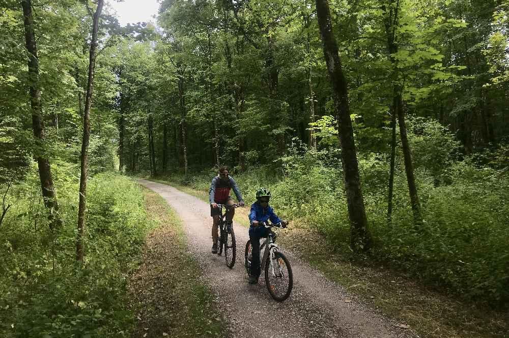 Wir folgen dem Isarradweg durch den Wald