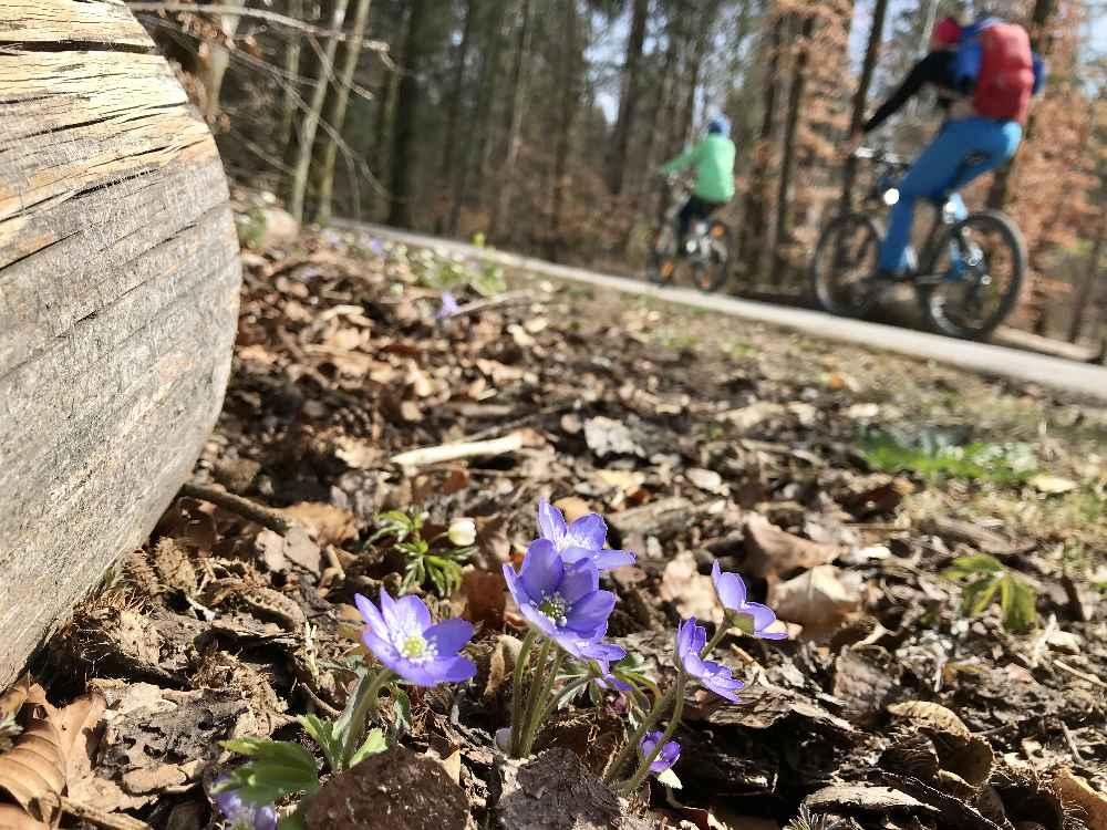 Ohne Autos radfahren: Auf dem Isarradweg Wolfratshausen