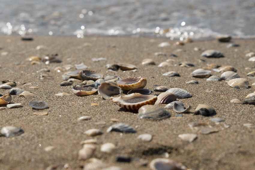 Familienurlaub am Meer in Italien - am langen Sandstrand in Cavallino Treporti bei Jesolo