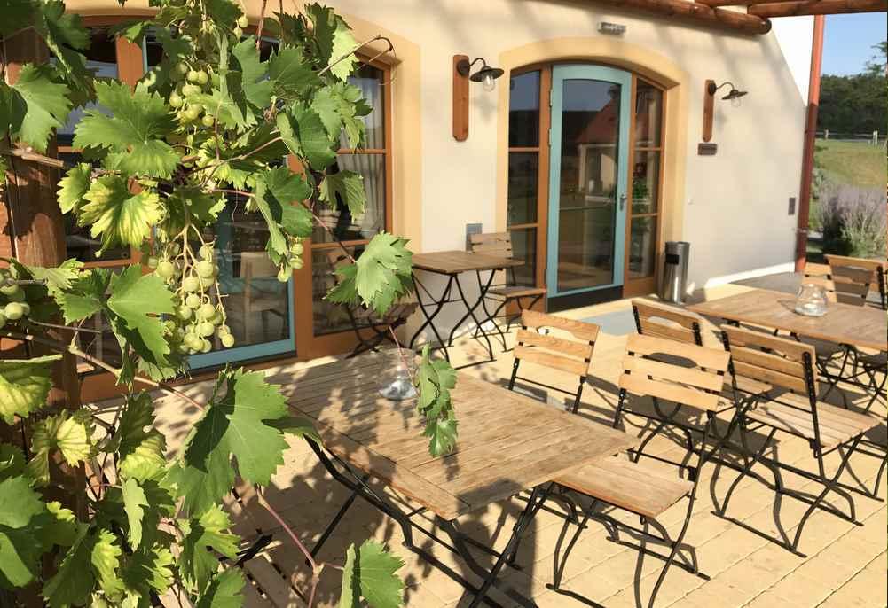 Zum Essen gehen wir auf die schöne Terrasse im JUFA-Hotel, wo sogar der Wein wächst