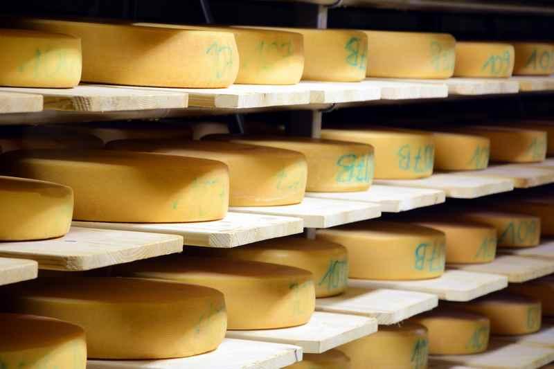 Der Blick in den Käsekeller, hier reifen die Käselaiber 3 Monate und der Bergkäse sogar noch länger