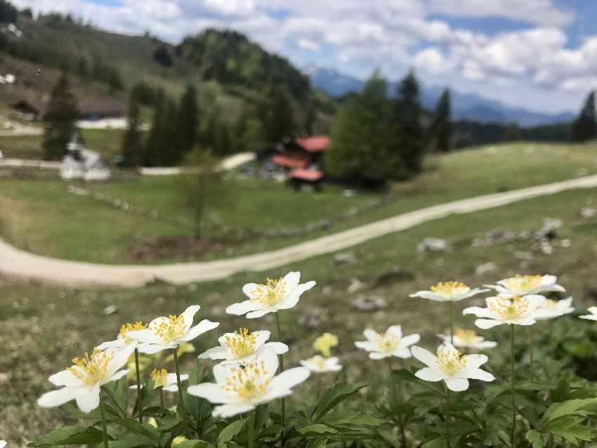 Die Blumen bei unserer Frühlingswanderung an der Kaindlhütte