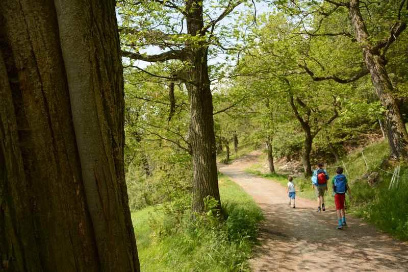Am Keschtnweg wandern mit Kindern durch den Kastanienhain