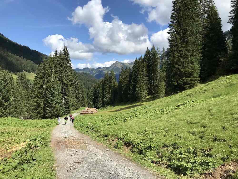 Zum Schluß geht es auf dem breiten Forstweg durch das Derrental zurück nach Baad