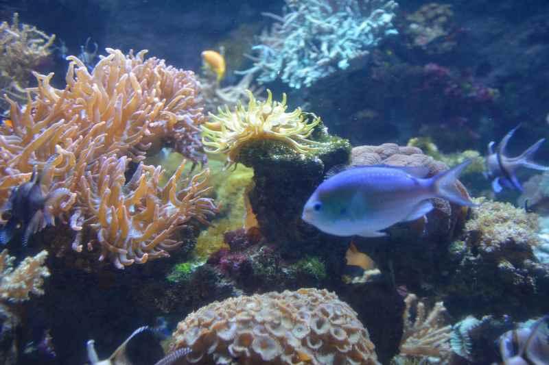Für Familien im Bodensseurlaub die Attaktrion: Das Konstanz Aquarium von Sealife