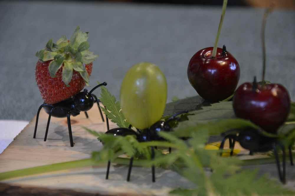 """Die Früchte auf den Rücken der Ameisen - daneben Eis und Wald. Eben eine """"Wald-am-eise"""" ;-)"""