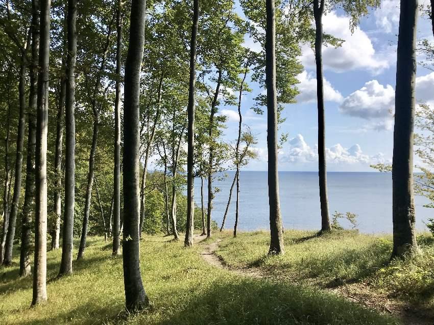 Traumhafte Aussichten durch den Wald auf die Ostsee - das ist die Kreidefelsen Rügen Wanderung