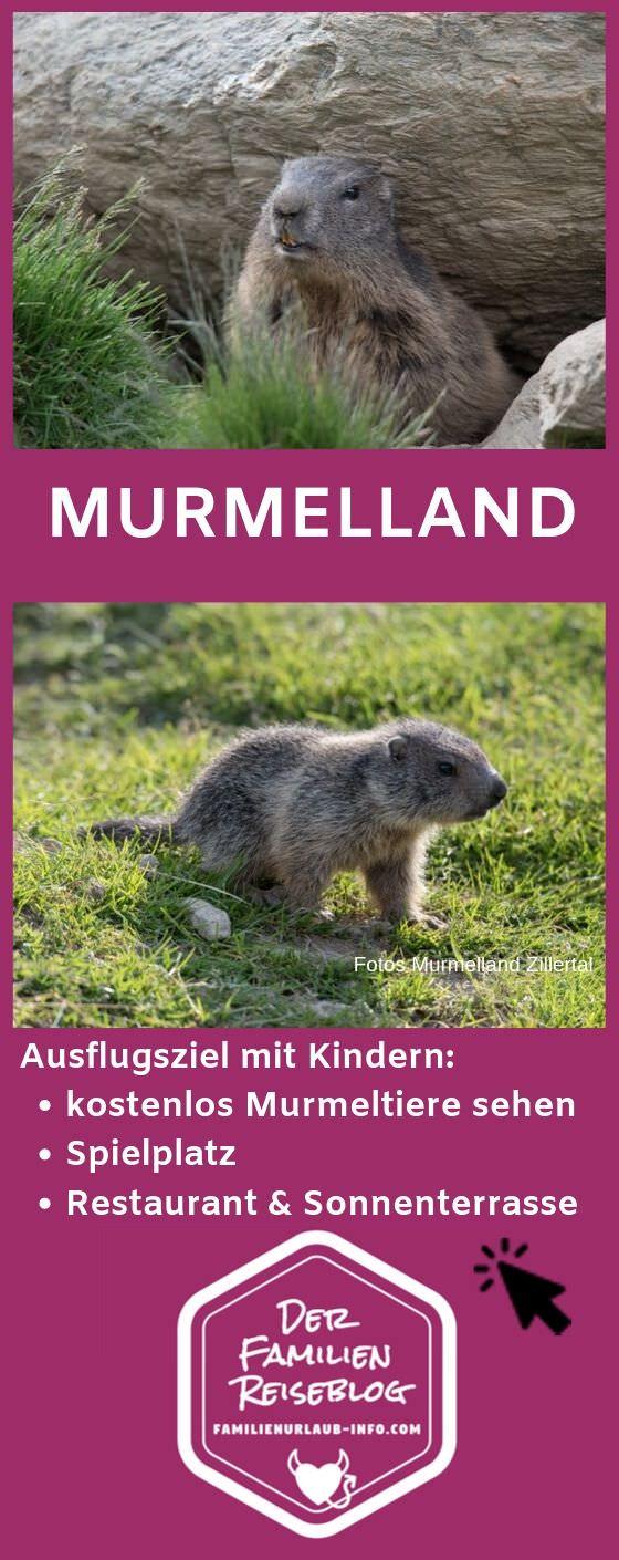 Murmelland Zillertal merken für den nächsten Tirol Urlaub - mit diesem Pin auf Pinterest