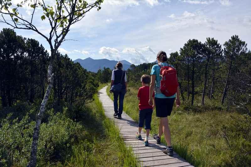 Auf dem bekannten Bohlenweg durch das Murnauer Moos wandern