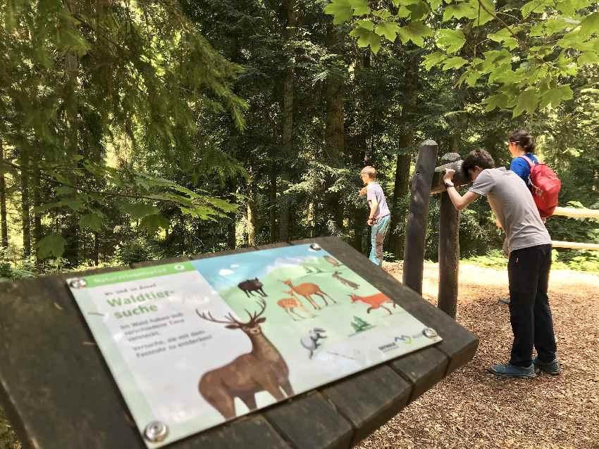 Der Naturerlebnispfad im Wald des Skywalk Allgäu