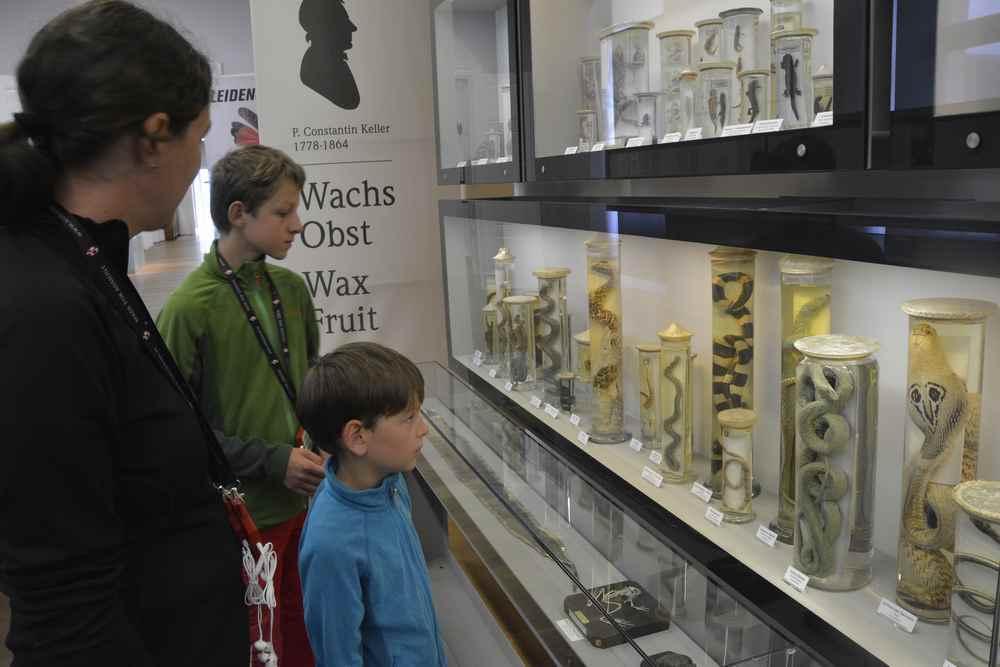 Wir stehen bei den ausgestellten Schlangen im naturhistorischen Museum