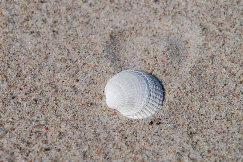 Familienurlaub Ostsee: Das ist viel feiner Sand mit Muscheln