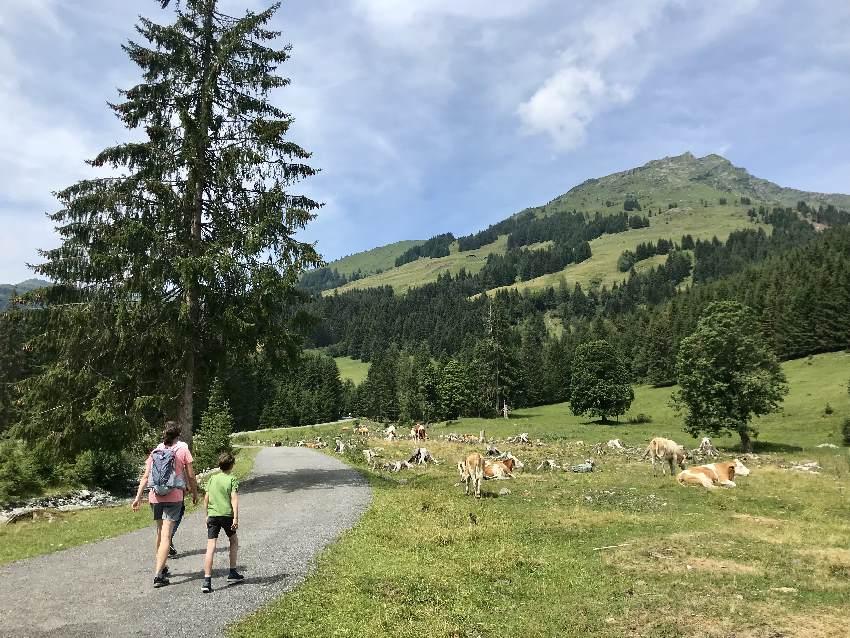 n Saalbach Hinterglemm wandern mit Kindern zur Lindlingalm, geht auch als Kinderwagen Wanderung!