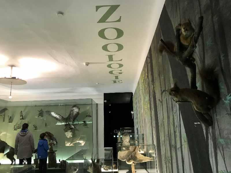 Schlechtwetterprogramm Kufstein mit Kindern - das Heimatmuseum mit den Tierpräparaten